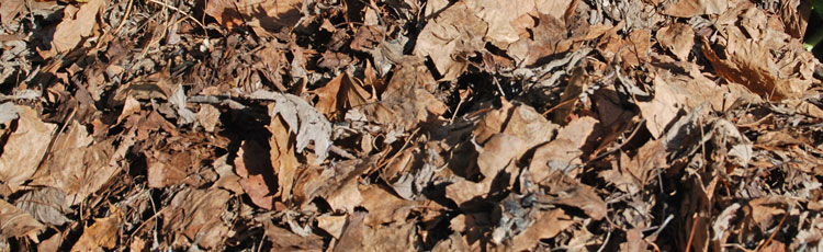 Using-Fall-Leaves-to-Improve-the-Soil.jpg