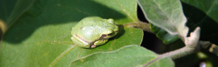 041814_Invite_Frogs_and_Toads_into_the_Garden.jpg