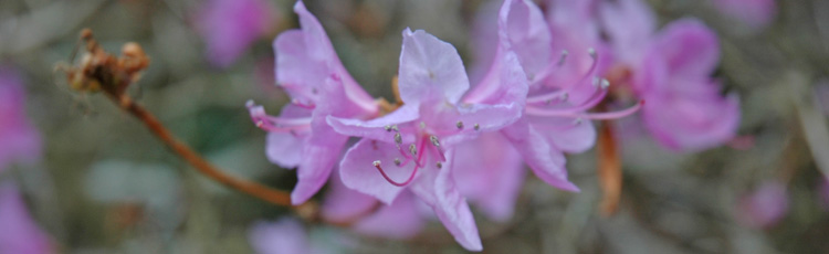 Spring flowering trees and shrubs blooming in fall melinda myers mightylinksfo