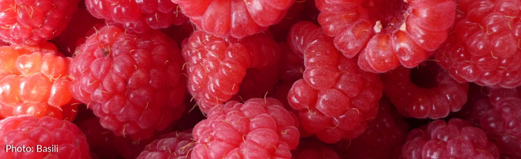 Getting-the-Best-Tasting-Raspberries-THUMB.jpg