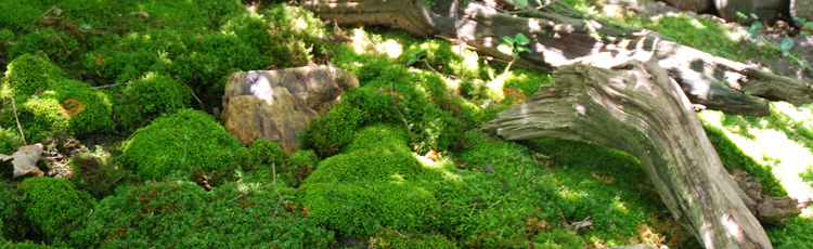 MOSS-CAN-BE-A-BEAUTIFUL-GARDEN-OR-ACCENT-THUMB.jpg