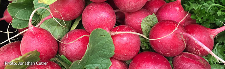 061720_Tame_the_Spicy_Heat_in_Radishes.jpg