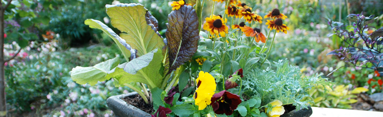 091319_Planting_and_Using_Fall_Container_Gardens.jpg