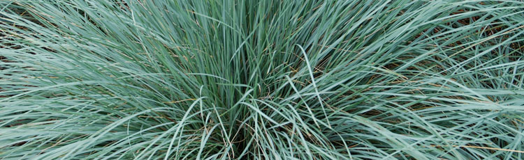 Hardy-Ornamental-Grasses-THUMB.jpg