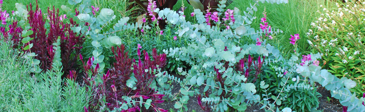 060914_Contrast_Colors_and_Texture_add_Pizzazz_to_the_Garden.jpg