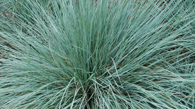 Hardy-Ornamental-Grasses-HERO.jpg