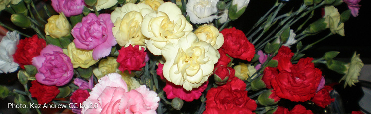 2012_345_MGM_Carnations_for_Mothers_Day.jpg