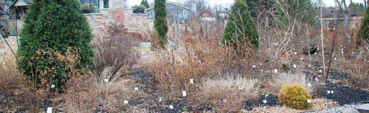 When-to-Begin-Spring-Clean-Up-of-Perennials.jpg