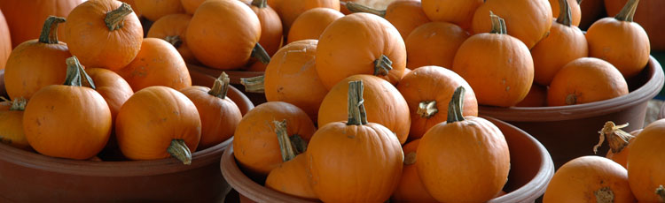 Storing-Pumpkins-THUMB.jpg