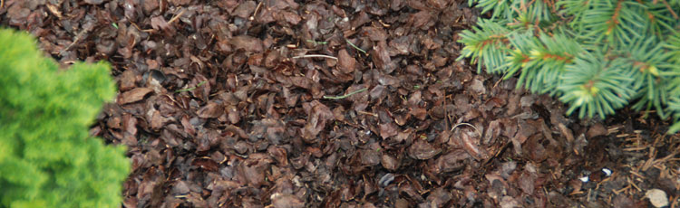 Cocoa-Bean-Shells-as-Mulch.jpg