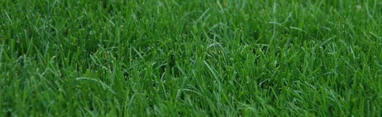070315_Test_Before_Treating_the_Lawn.jpg