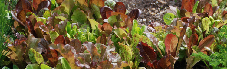 050415_National_Salad_Month_Grow_Your_Own_Salad.jpg