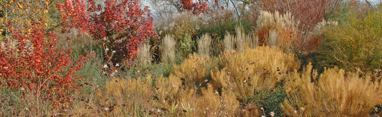 2010_99_MGM_Fall_Perennial_Garden_Landscape_for_Fall_Color.jpg