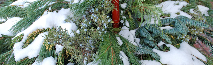 2010_118_MGM_Winter_Container_Gardens_and_Outdoor_Arrangements.jpg