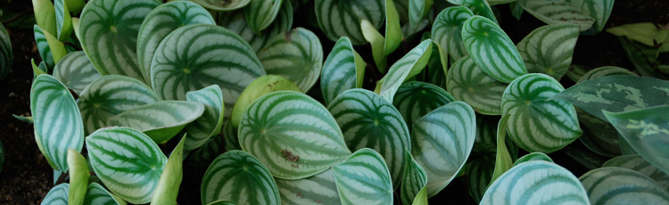 2011_285_MGM_Caring_for_Your_Indoor_Plants.jpg