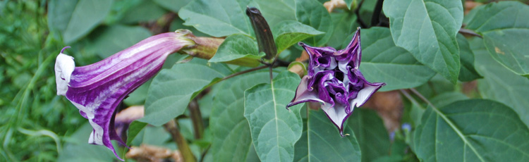 Saving-Angels-Trumpet-Over-Winter-THUMB.jpg