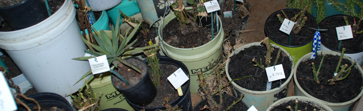2010_95_MGM_Overwintering_Container_Gardens.jpg