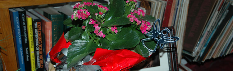 120617_Three_Tips_Holiday_Plant_Care.jpg
