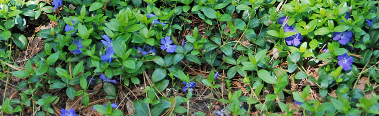 Periwinkle-Taking-Over.jpg