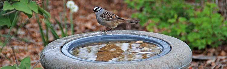 012420_Provide_Water_for_the_Birds_Yearround.jpg