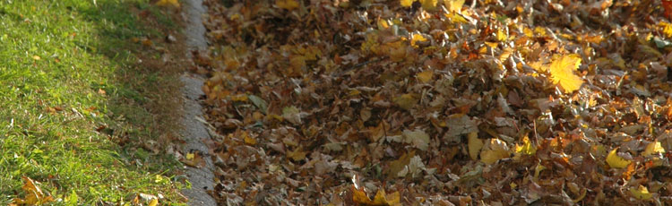 Leaves-as-Winter-Mulch.jpg