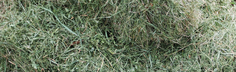Chemically Treated Grass Clippings In Compost Pile