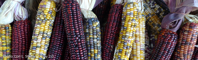 2012_423_MGM_The_History_of_Indian_Corn.jpg