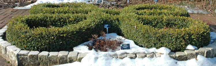 Winter-Care-for-Boxwood.jpg