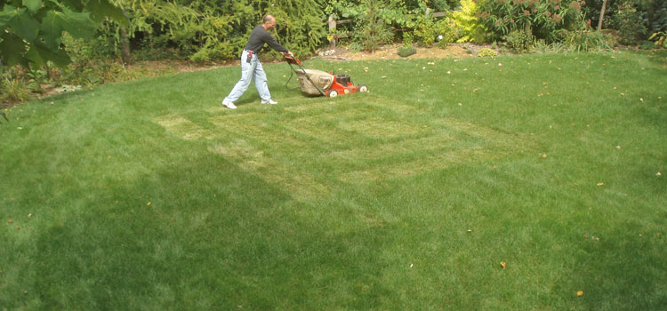 Lawn-Maze-Start-cutting.jpg