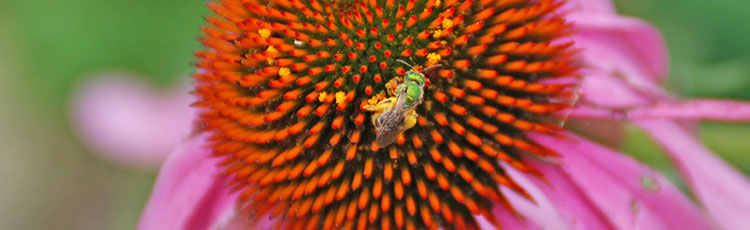 062220_National_Pollinator_Week_Celebrates_the_Importance_of_Pollinators.jpg