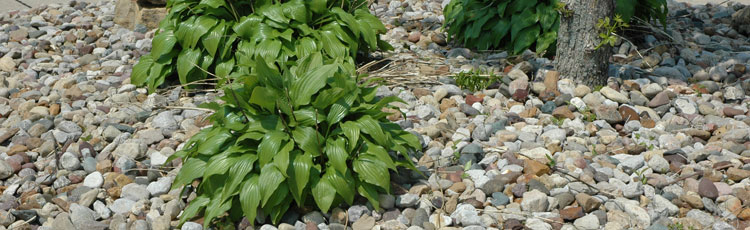Using-Stone-Mulch-Around-Trees-and-in-the-Garden.jpg