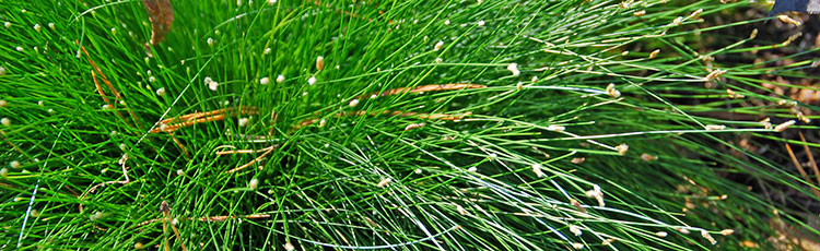 090920_Grow_Fiber_Optic_Grass_Indoors-THUMB.jpg