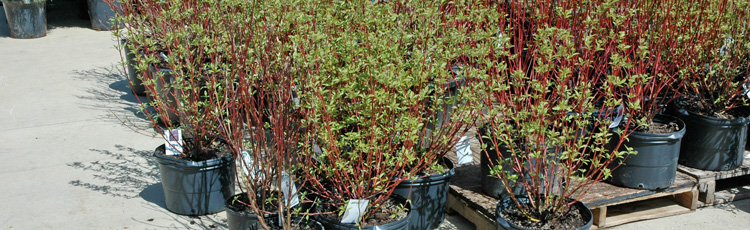 Winter Care for Unplanted Trees Shrubs and Perennials Melinda