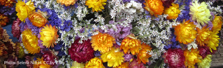 072916_Four_Ways_to_Preserve_Flowers.jpg