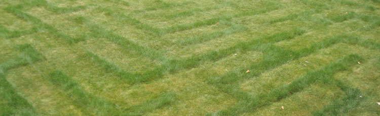grow-and-mow-a-lawn-maze-thumb.jpg