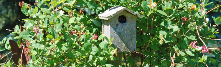 021519_National_Nest_Box_Week-THUMB.jpg