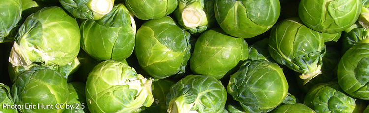Increase-Yield-of-Brussels-Sprouts-THUMB.jpg
