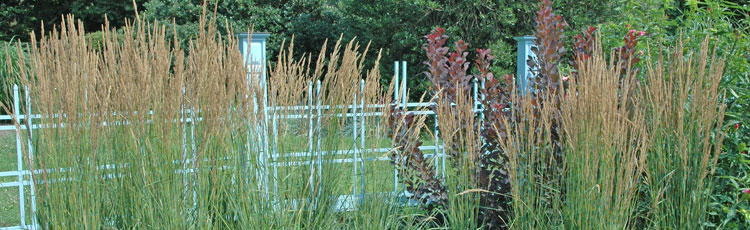 Ornamental-Grasses-Tolerant-of-Cold-Winters-and-Clay-Soils.jpg