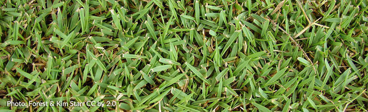 Growing-Zoysia-Grass-in-the-North.jpg