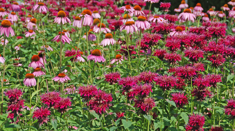 Best-Time-to-Cut-Back-Perennials.jpg