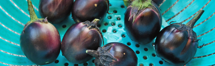 Saving-Eggplant-Seeds-THUMB.jpg