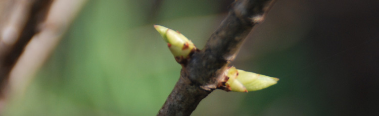 Timing-Spring-Pruning-THUMB.jpg