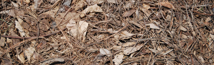 Best-All-Around-Mulch.jpg
