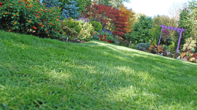 Keep-Your-Lawn-Green-and-Healthy-All-Season-Long.jpg