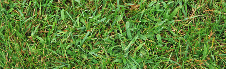Preventing-Crabgrass-in-the-Lawn.jpg