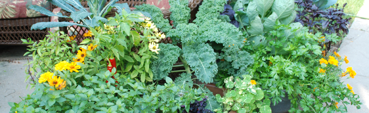 2013_507_MGM_Edible_Ornamental_Container_Gardens.jpg