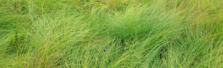 091718_Ornamental_Grasses_for_Small_and_Large_Gardens.jpg