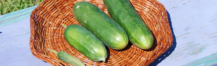 090219_Keeping_Cool_with_Cucumbers.jpg