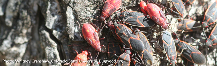 Red-Bugs-in-the-Garden-and-on-the-House-THUMB.jpg