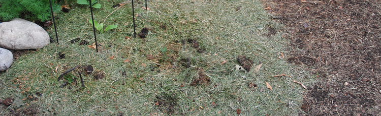 2012_363_MGM_Mulch_Dont_Bag_Those_Clippings.jpg